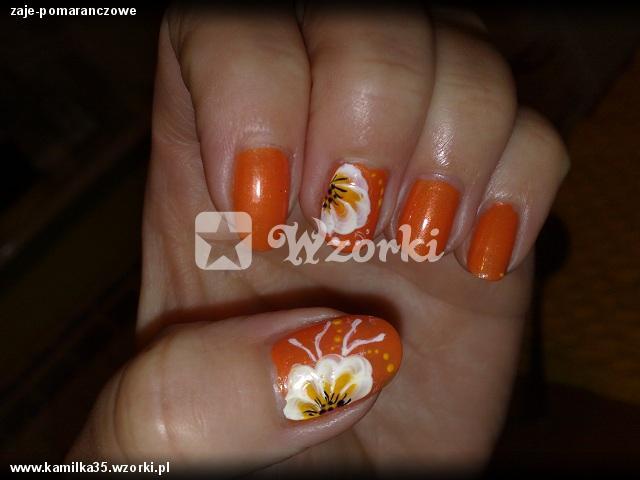 zaje-pomaranczowe