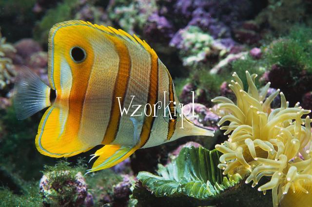 narazie rybka ,ale nie dlugo beda pazurki..:-)