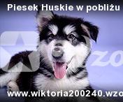 Piesek Huskie w pobliżu